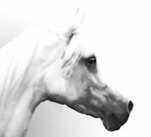 Arab Horse Portrait  by Furtographic