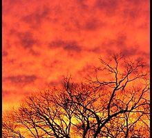 Orange fire sunset by webgrrl