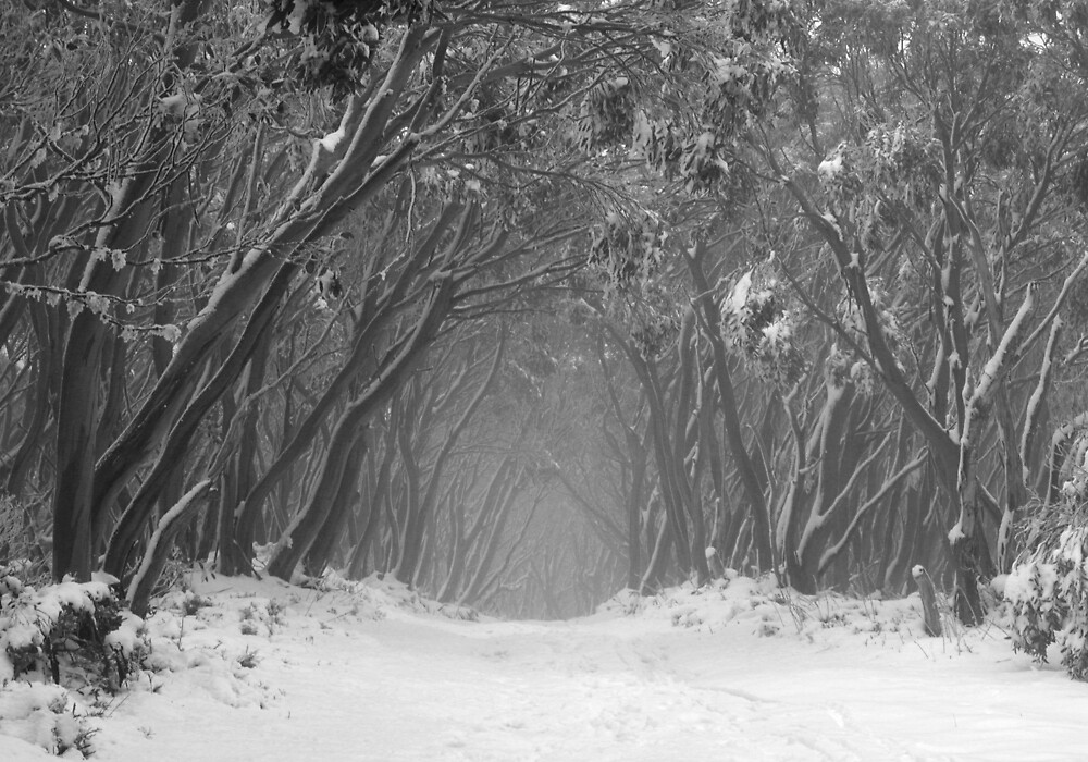 Snow Gum Tunnel by John Barratt