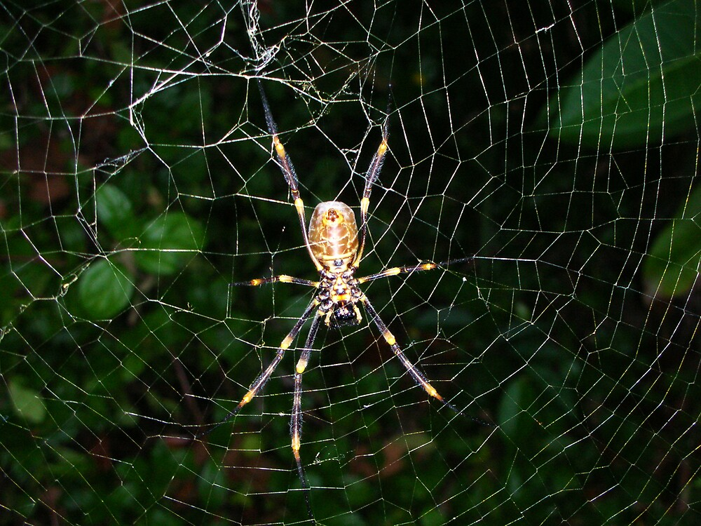 Arachnaphobia by omocha