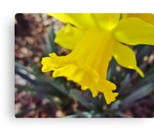 Downward Daffodil Canvas Print