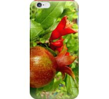Young Pomegrantes iPhone Case/Skin