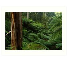Ferns, Otway Ranges Art Print