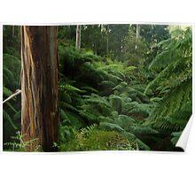 Ferns, Otway Ranges Poster