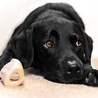 Black Labrador by JFPhotography