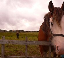 2 Horseys Donegal by Michelle Mc Goff