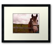 2 Horseys Donegal Framed Print