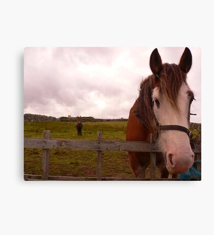 2 Horseys Donegal Canvas Print