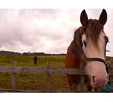 2 Horseys Donegal Photographic Print
