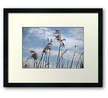 Phragmites Reed Framed Print