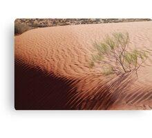Perched,Simpson Desert,N.T. Metal Print