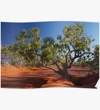 Morning, Hay River, River Bed, North Simpson Desert Poster