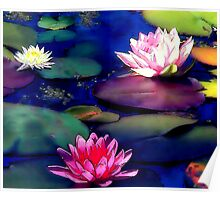 Lily Pond,  Poster