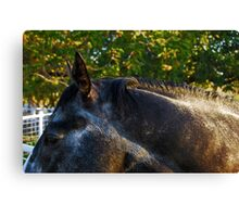 Argentinian Stud Canvas Print