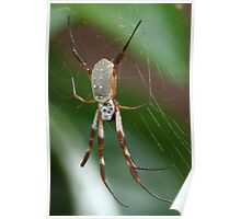 Golden Orb-Weaver Poster