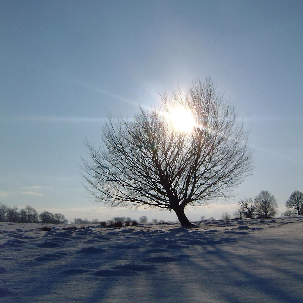radiance by Devan Foster