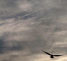 flight of the gull by Devan Foster