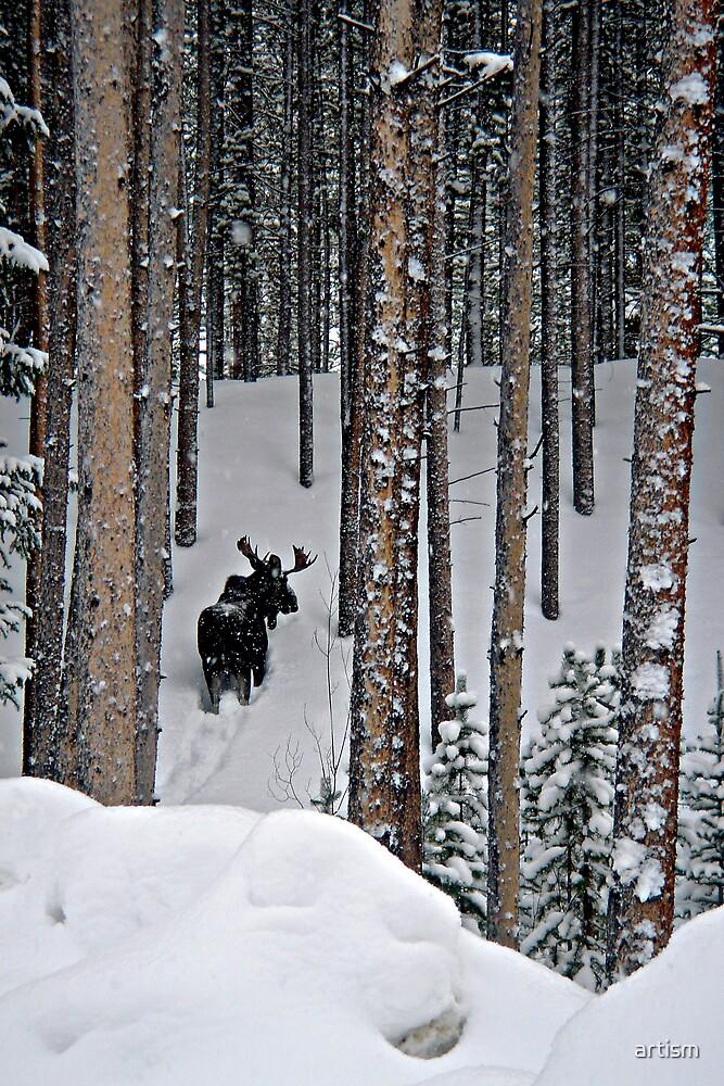 Snow Series - Backside Vasquez by artism
