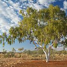 Ghost Gum,Batton Hill North Simpson Desert by Joe Mortelliti