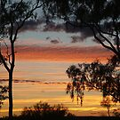 Sunrise through the Ghost Gums,Batton Hill,North Simpson Desert by Joe Mortelliti