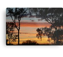 Sunrise through the Ghost Gums,Batton Hill,North Simpson Desert Metal Print