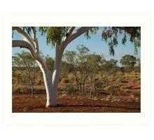 Ghost Gum,Outback Australia,N.T. Art Print
