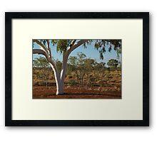 Ghost Gum,Outback Australia,N.T. Framed Print