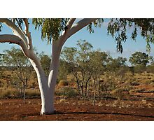 Ghost Gum,Outback Australia,N.T. Photographic Print