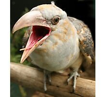 A little bit Cuckoo Photographic Print