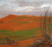 Pending Wild Flowers,North Simpson Desert by Joe Mortelliti