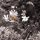 Better Bee Happy by georgiegirl