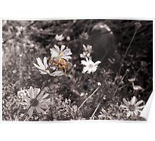 Better Bee Happy Poster