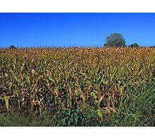 "Kansas Corn ""As High as the Elephants Eye"" Photographic Print"