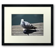 seagull on quay Framed Print
