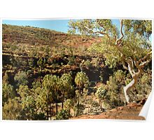 Palm Valley, West Mcdonell Ranges,NT Poster