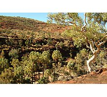 Palm Valley, West Mcdonell Ranges,NT Photographic Print