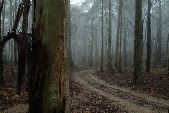 Forest Mist by Joe Mortelliti