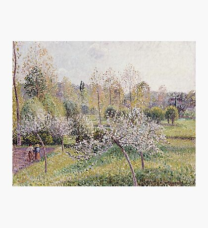 Camille Pissarro - Apple Trees In Blossom, Eragny Photographic Print
