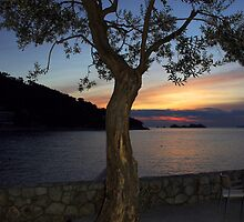 olive tree by kenan