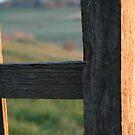 Back Fence by Steven Zan