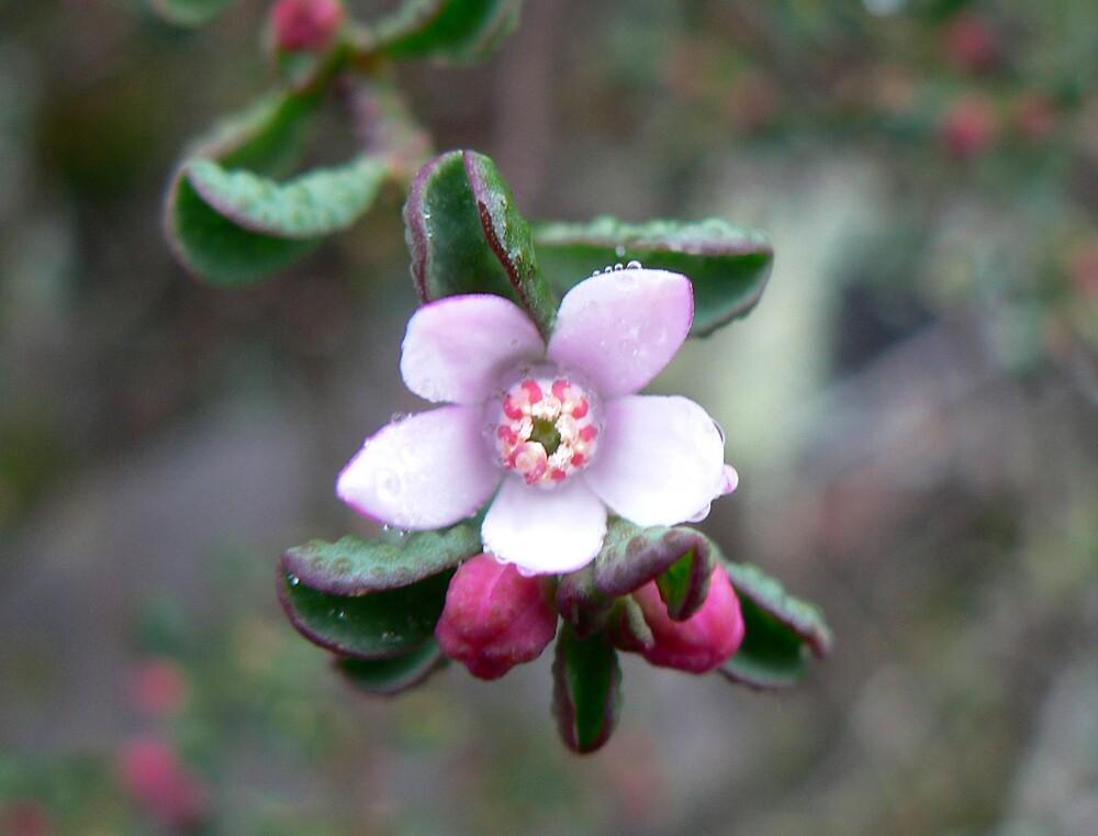 Pretty in Pink by Treegirl
