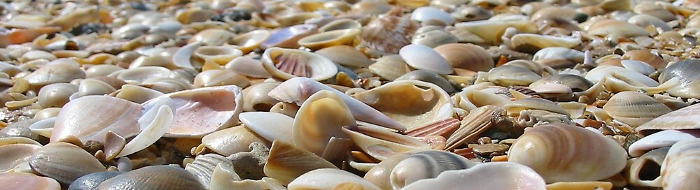 Sea Shells by the Sea Shore by Steven Zan
