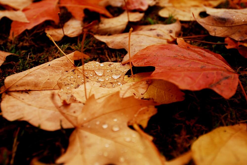 Autumn 3 by Sue Wickham