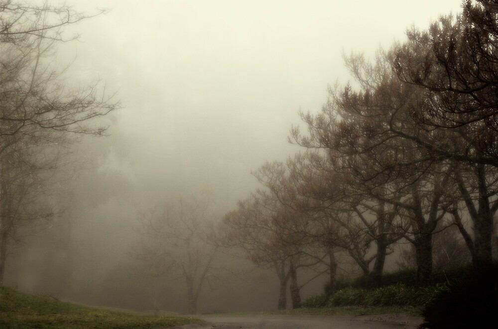 Wisteria in Mist by Sue Wickham