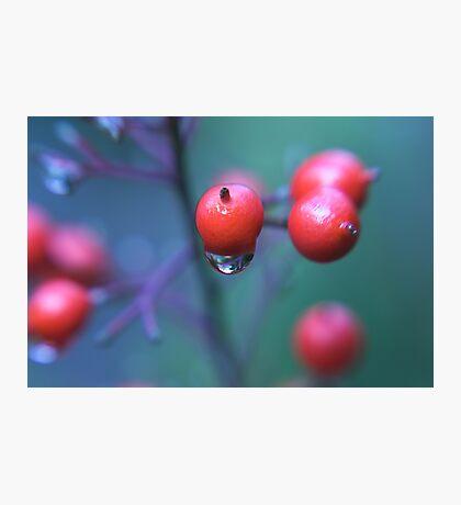 more precious Photographic Print