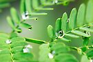 dew drop by Helen  Page