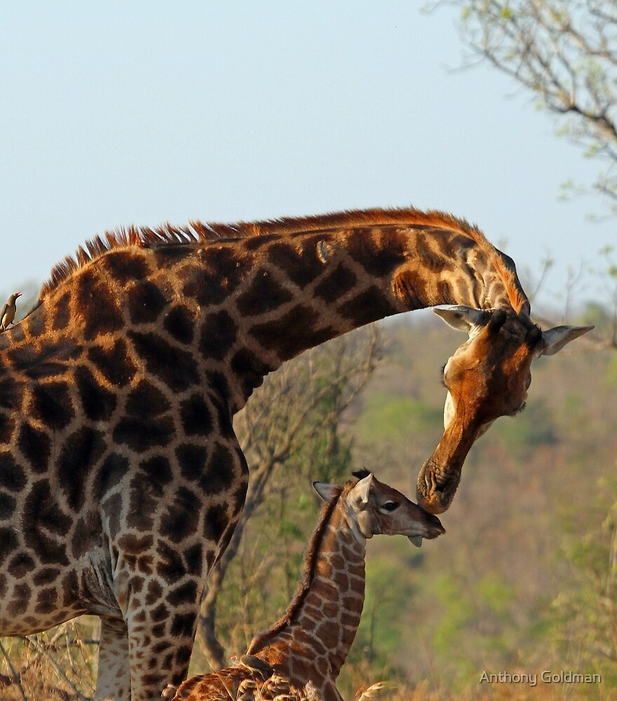 A mothers love ! by jozi1