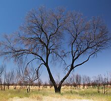Burnt landscape by Chris Livingstone