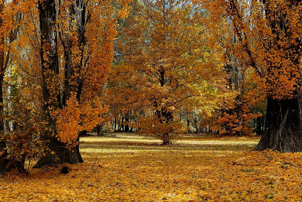 Autumn in Orange 2 by Geoffrey Chang