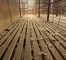 Shearing Shed  by peter